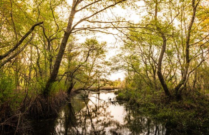 Lagoas de Bertiandos