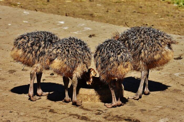 Mooiplaas Ostrich Farm