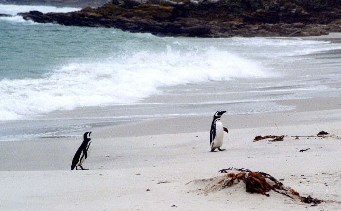 Penguin Island Beaches
