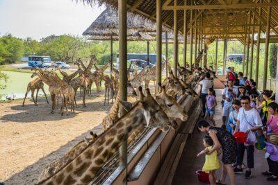Phnom Penh Safari