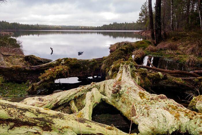 Pohja-Korvemaa Nature Reserve