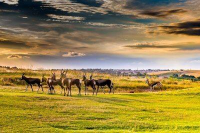 Best of Wildlife in Pretoria