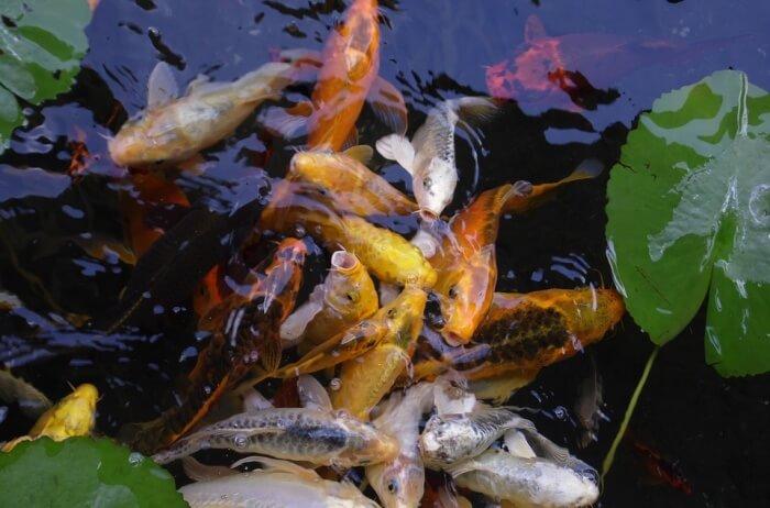Qian-Hu-Fish-Farm