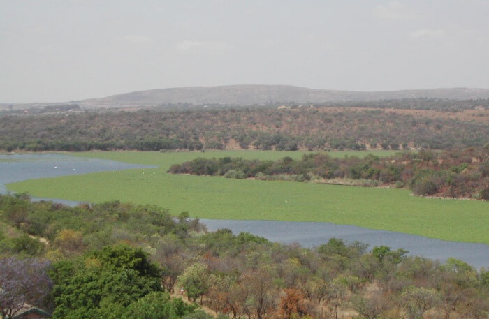 Roodeplaat Dam Provincial Nature Reserve