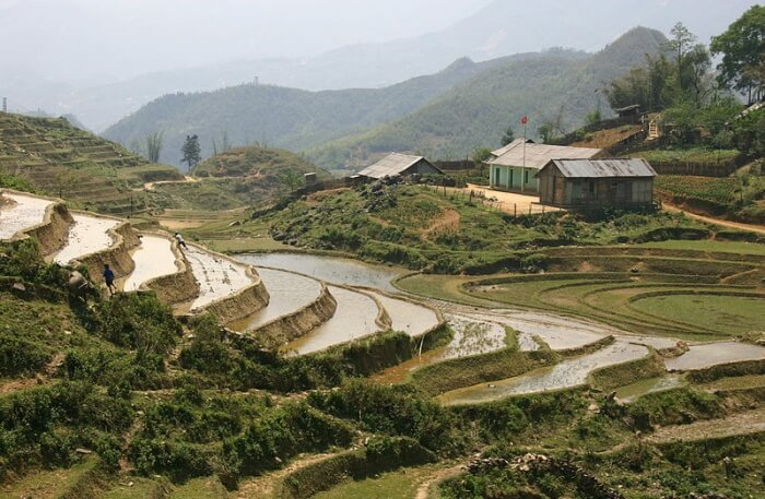 Indochina's Rice Roof