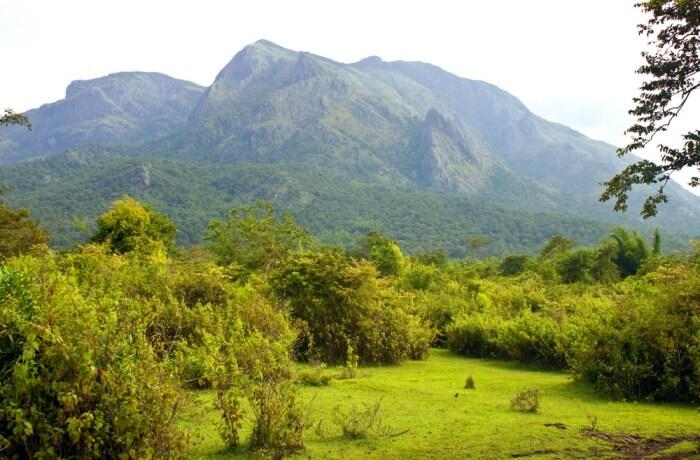 Summers in Mudumalai National Park