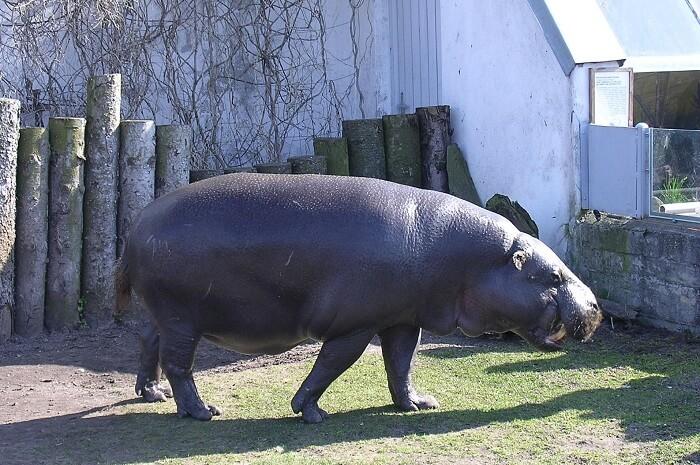 Tallinn Zoo