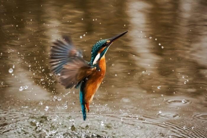 The Birds of Queensland