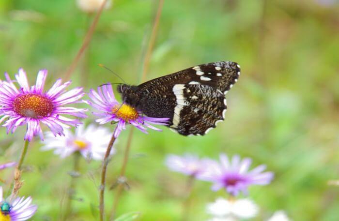Biodiversity Perseverance