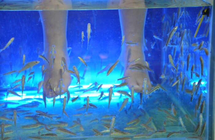 Try the Fish Spa Therapy