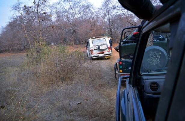 Van Safari