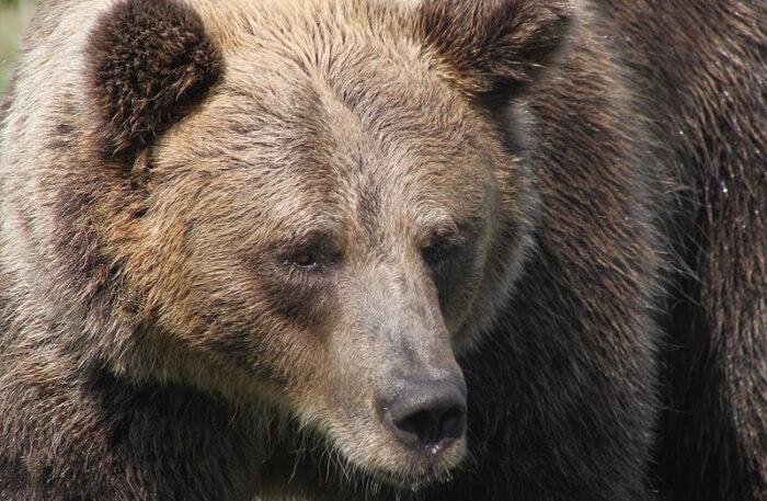 Veresegyház Bear Farm