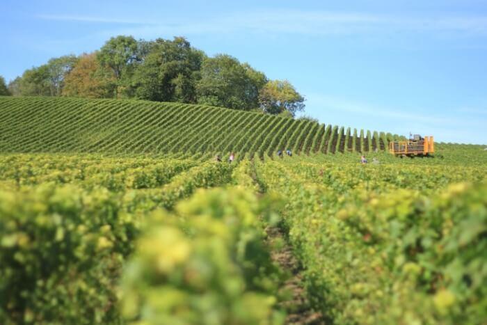 Vigne De La Féronne Haute