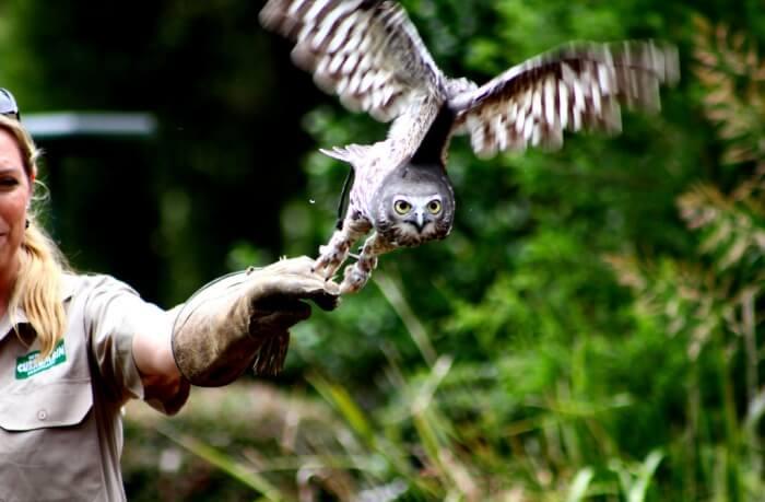 Visit Currumbin Wildlife Sanctuary