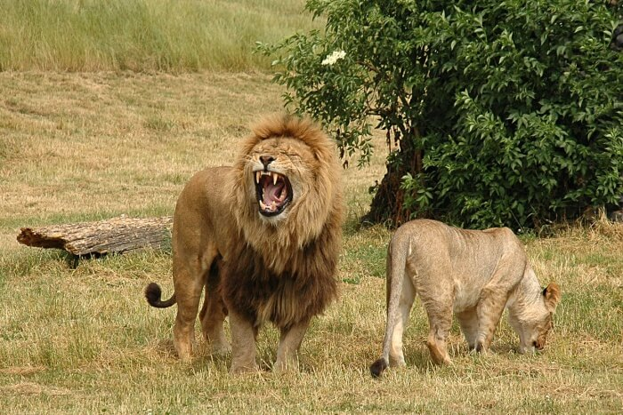 Vredenheim Big Cats Park