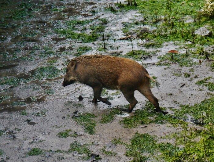 Wildlife In Pulau Ubin