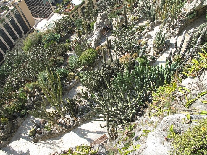exotic garden cactus monaco
