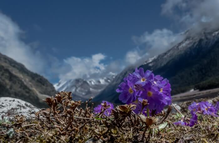 Sikkim images