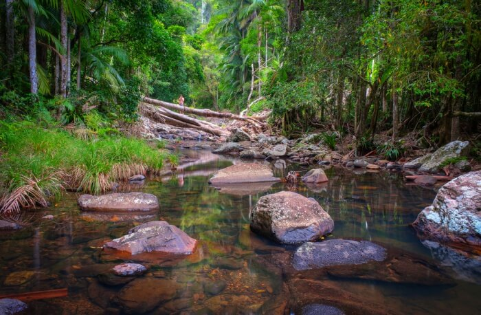 About Springbrook National Park