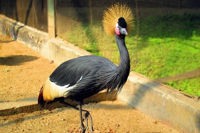 Alipore Zoo in Kolkata