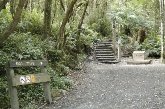 Dandenong-Ranges-National-Park-1000-Steps