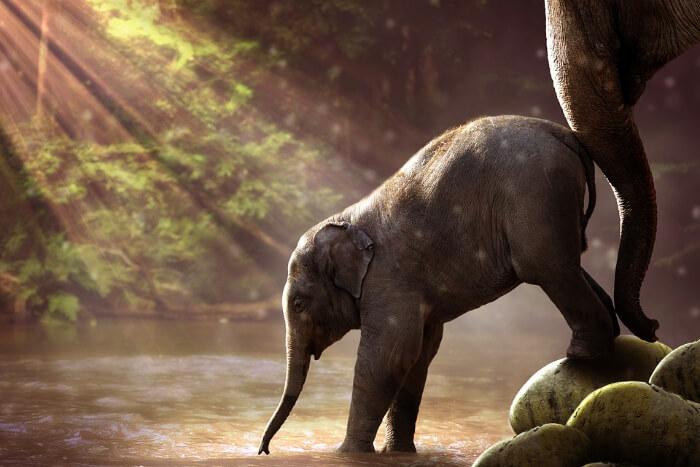 Elephantastic Elephant Farm