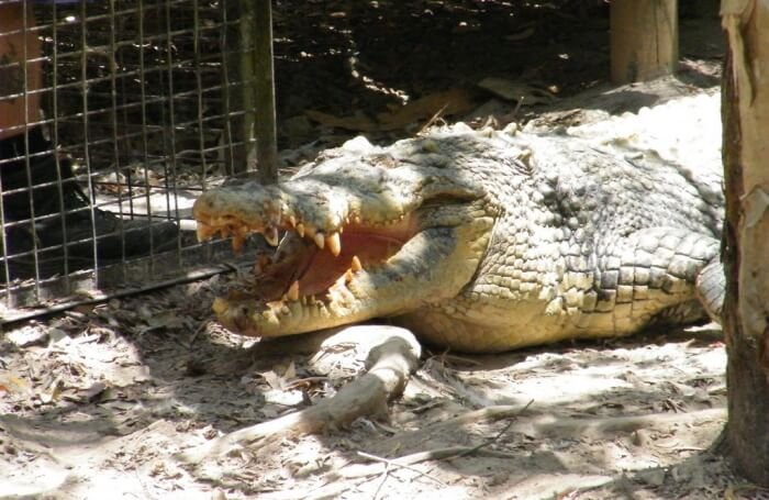 Hartley's Crocodile Adventures