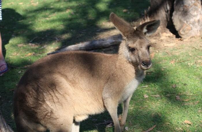 How To Reach Lone Pine Koala Sanctuary
