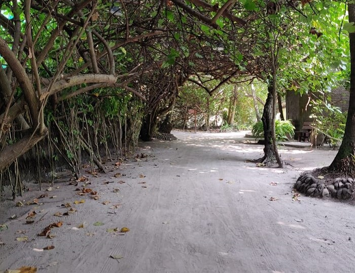 roamed around the island