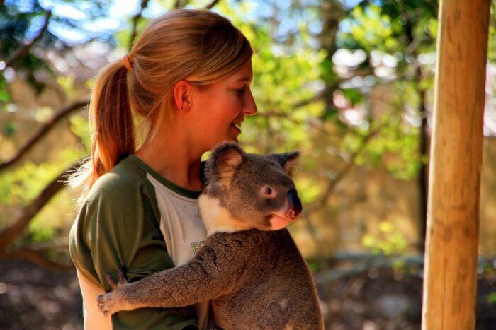 Lone Pine Koala Sanctuary cover img