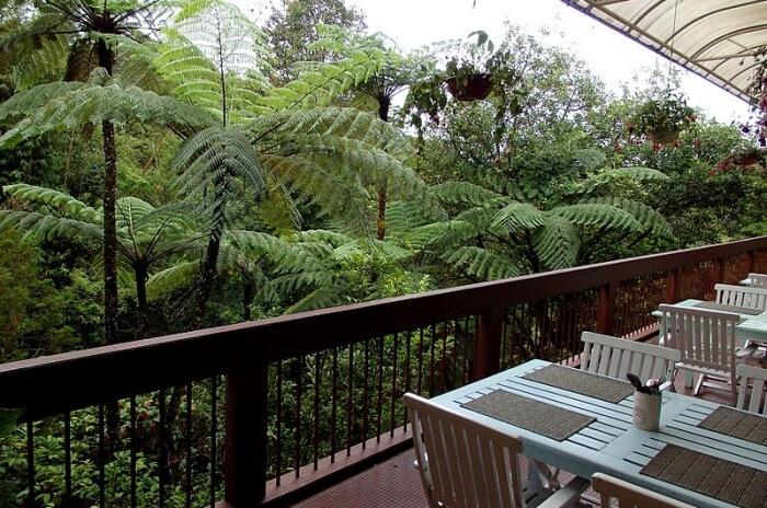 Mount Kinabalu Park Botanical Garden