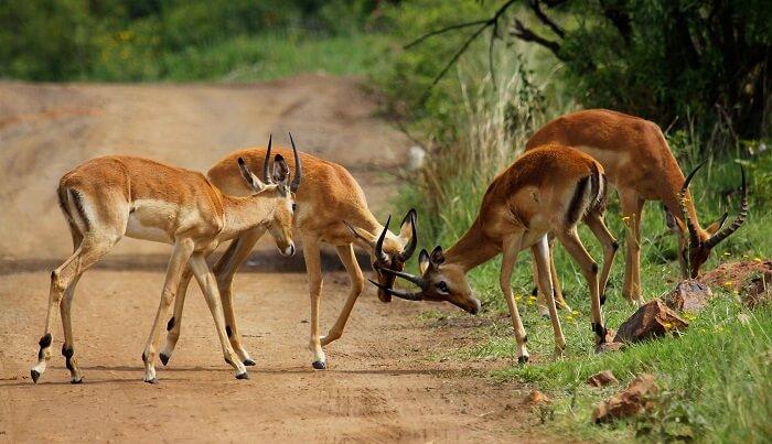 Pilanesberg National Park in Africa
