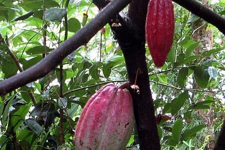 Ranweli Spice Garden