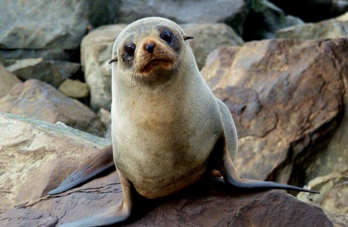Greet happy seals
