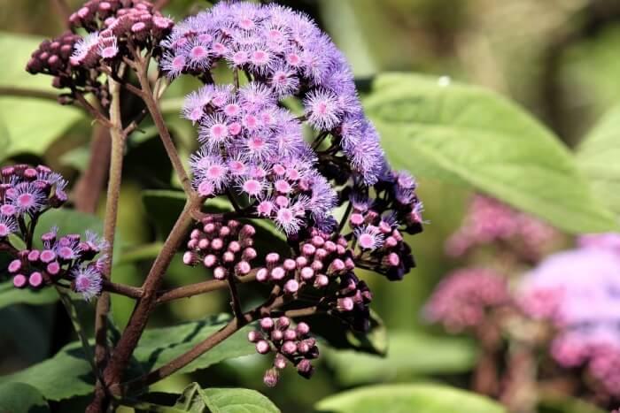 Floral Sydney Plants Natural Garden Royal Botanic