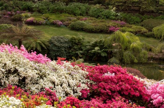 The Dandenong Ranges Botanic Garden
