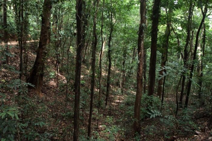 Udawattekele Sanctuary