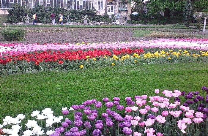 Visit The Lush Craiova Botanical Garden