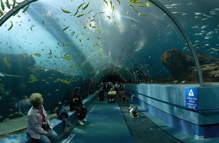 Visit The National Aquarium In North Queensferry