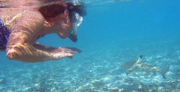 snorkeler in maldives