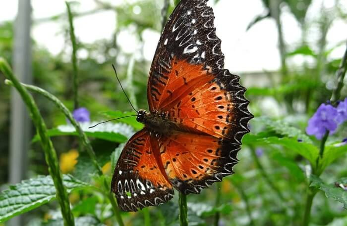 Butterfly View