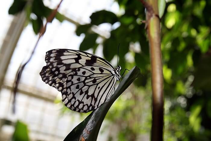 butterfly sitting on a branch