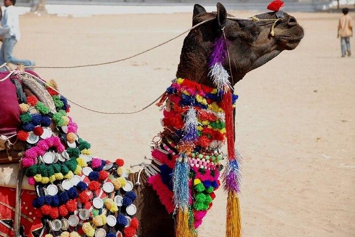 Pushkar Camel Fair near Ajmer