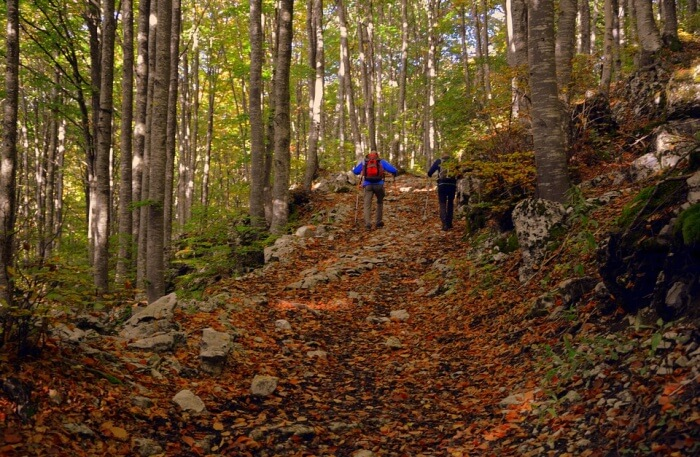Forest Excursion Trail Trekking Autumn